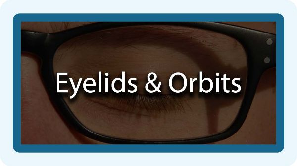 eyelids and orbits